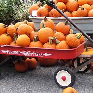 Yadkin Valley Pumpkin Festival